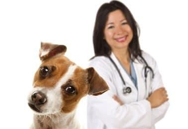 Hundeversicherung für Jack Russel Terrier
