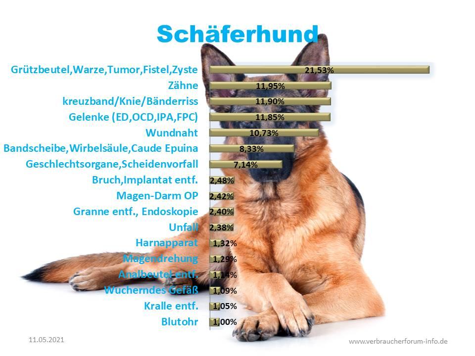 Statistik über die häufigsten Operationen beim Schäferhund