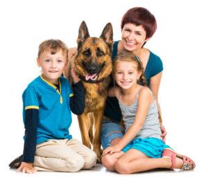 Hundeversicherung Vergleich für Schäferhund