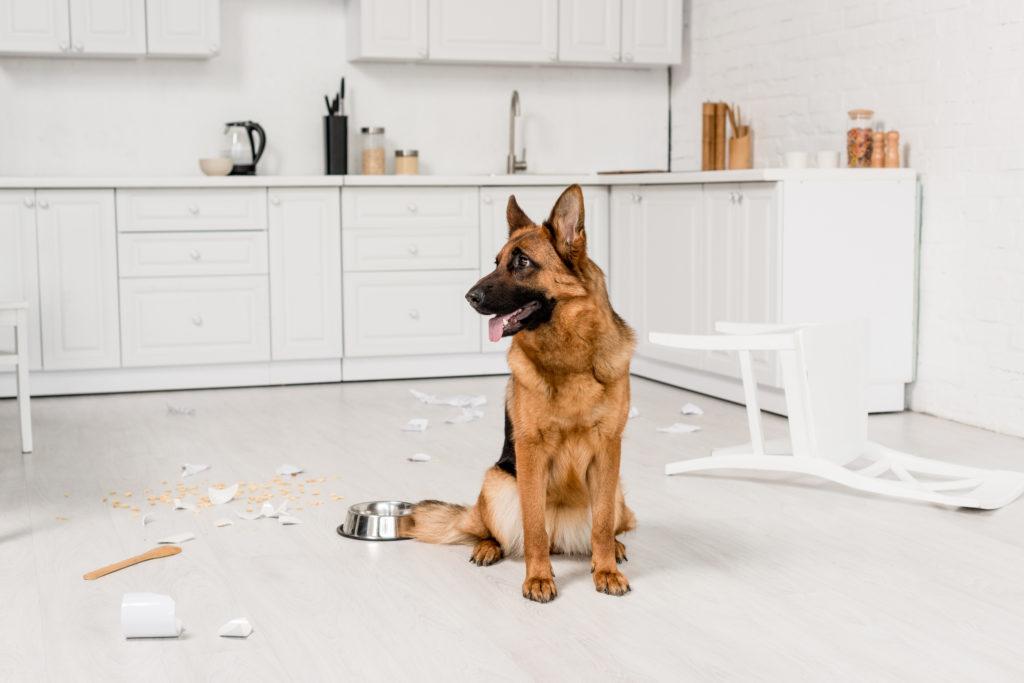 Hundehaftpflicht Schaden