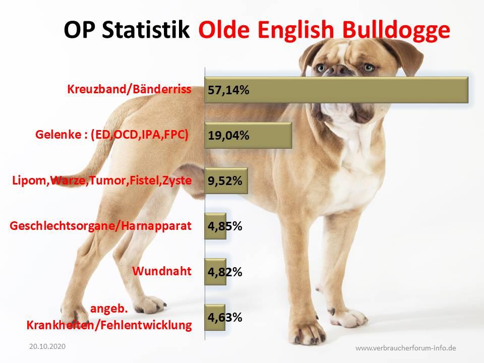 OP Statistik Olde English Bulldog