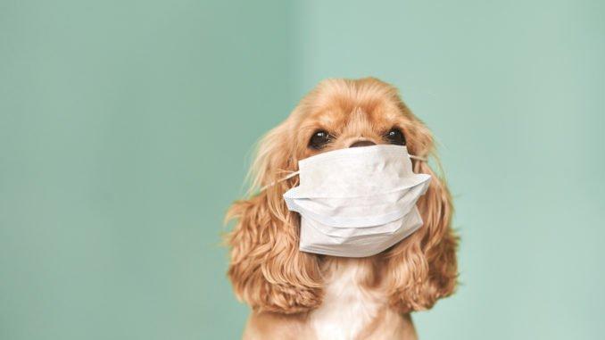 Coronavirus beim Hund