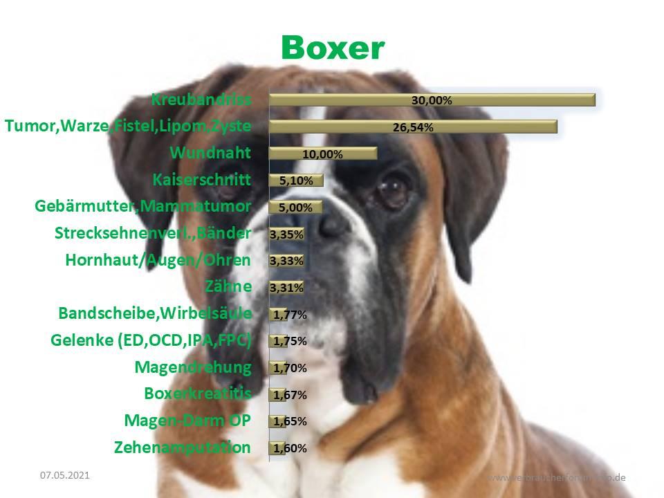 OP Statistik Boxer Krankheiten