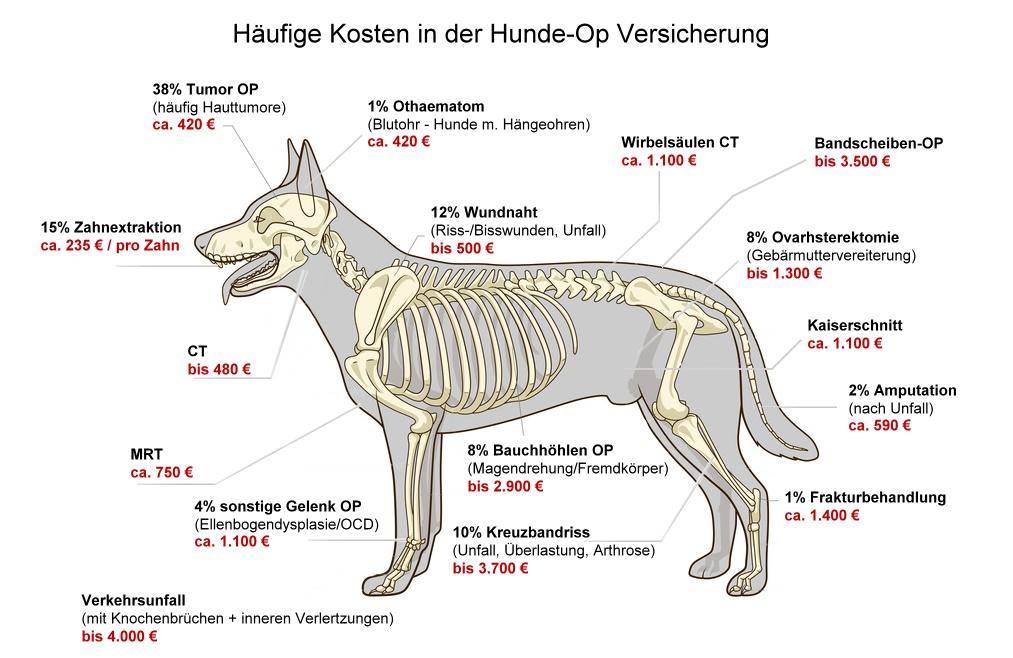 Häufige Hundekrankheiten